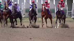 Начало лошадиных скачек на беговой дорожке