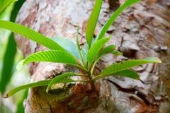 Начало молодых листьев Стоковая Фотография RF