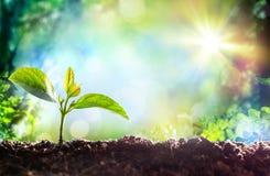 Начало ростка новой жизни растущего Стоковое Изображение RF