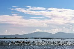 Начните лететь птицы воды Стоковое Фото