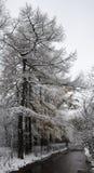 начните как раз зима парка Стоковая Фотография