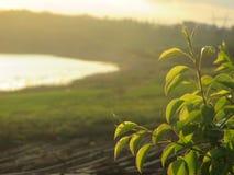 Наша красивая ферма Стоковые Фотографии RF