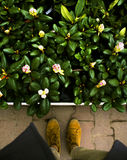 Нашествие цветков Стоковое Фото