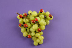 Нашествие ladybugs на связке винограда стоковая фотография rf