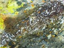 Нашивка бегов ископаемых через утес Стоковое Изображение RF