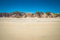 Нашивка белых песчанной дюны и заводов на пляже в Abel Tasman Стоковое фото RF