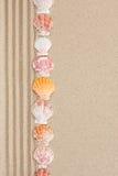 Нашивка seashells лежа на песке Стоковая Фотография RF