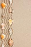 Нашивка seashells лежа на песке Стоковые Фотографии RF