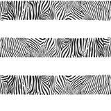 Нашивки зебр Иллюстрация вектора