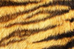Нашивки тигра на реальной животной коже Стоковые Фото