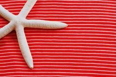 нашивки starfish стоковая фотография rf