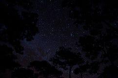 наши звезды Стоковые Изображения