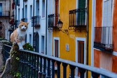 Нашл кот в красочном Cuenca Испании стоковая фотография