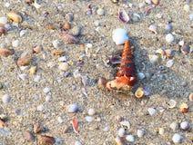 Наяда в реальном маштабе времени Gastropod Turritella приходя из раковины стоковые фотографии rf