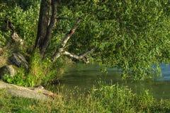 На береге озера Стоковые Изображения