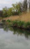 На берег пруд Стоковое Изображение RF