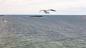 Над взглядом чаек летая к острову в Балтийском море Стоковые Фото