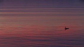 над водой отражений Стоковые Фотографии RF