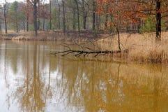 Над водой. стоковое изображение rf