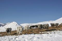 На выгоне зимы Стоковые Изображения