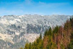 На границе весны и зимы Стоковая Фотография