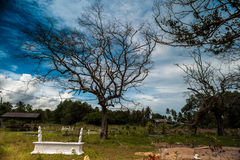 Надгробная плита под деревом a умирая стоковое изображение rf