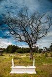 Надгробная плита под деревом a умирая стоковая фотография rf