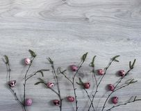 На деревянной предпосылке ветви березы с blossoming бутонами яичек триперстки зеленого цвета почки розового цвета Стоковые Фотографии RF