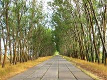 На дороге к стороне деревьев Стоковые Фотографии RF