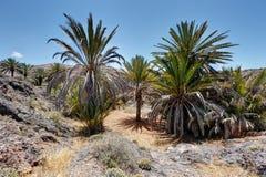 На дороге Mirleft - Марокко Стоковое фото RF