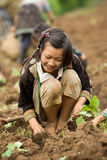 На детях горных склонов этнической группы Hmong, имейте потеху засаживая капусту Стоковые Фотографии RF