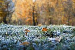 Налет инея на траве Стоковое Изображение RF