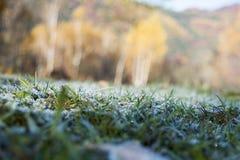 Налет инея на траве Стоковая Фотография RF