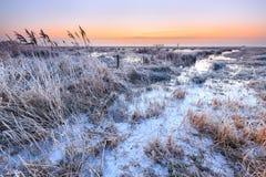 Налет инея на тростнике в ландшафте утра зимы Стоковые Изображения
