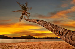 над заходом солнца моря ладони Стоковые Фотографии RF