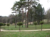 На зеленом цвете луг растет несколько высокорослых сосны и деревьев, уравновешенных в форме шариков Стоковое фото RF