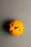 Надземная съемка круглых ухабистых желтых тыквы или сквоша Стоковое Фото