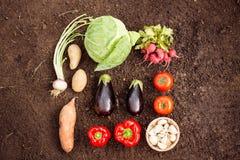 Надземный взгляд свежих овощей на саде Стоковые Фото