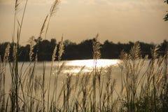 На зеленой лужайке в заходе солнца Стоковое фото RF
