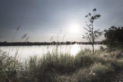 На зеленой лужайке в заходе солнца Стоковое Фото