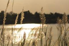 На зеленой лужайке в заходе солнца Стоковая Фотография