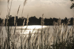 На зеленой лужайке в заходе солнца Стоковые Изображения RF