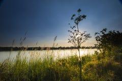 На зеленой лужайке в заходе солнца Стоковые Изображения