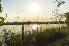 На зеленой лужайке в заходе солнца Стоковая Фотография RF