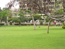 На зеленых цветах стоковое фото