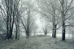 над зимой валов снежка съемки ландшафта пущи Стоковое Изображение