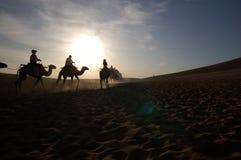 На зоре, верблюды в пустыне Стоковые Изображения RF