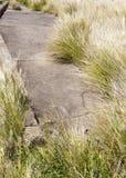 Над, который выросли тропой Стоковое фото RF