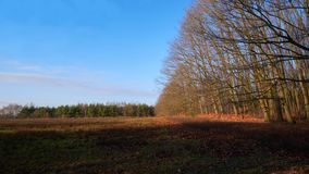 На крае леса стоковые фото
