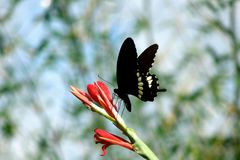 На крылах летания Стоковые Изображения